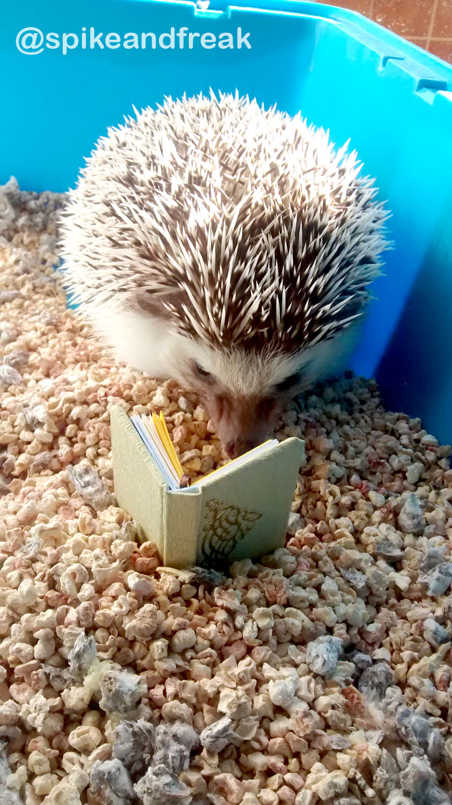 ¿Qué estará leyendo nuestro erizo Kierkegaard?