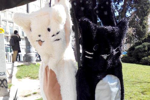 mochilas gato